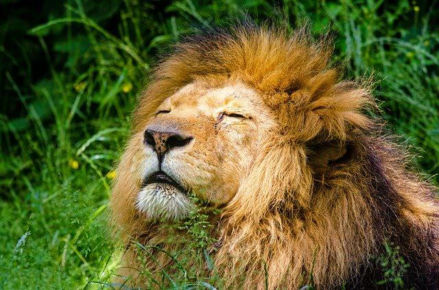 significato di netiquette con definizione e applicazione senza leoni da tastiera - Stefania Lovaglio
