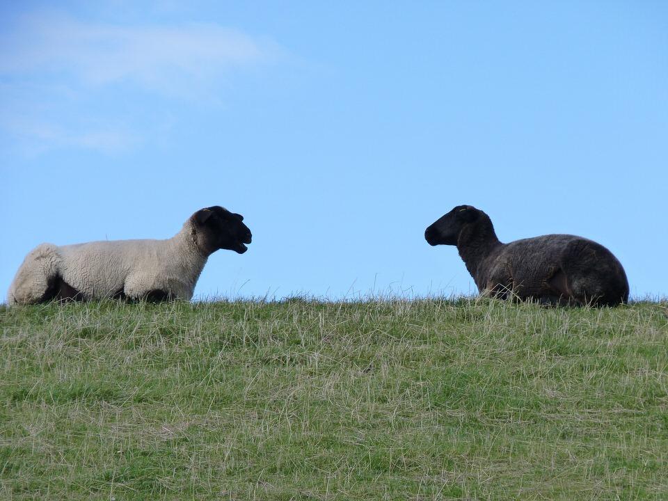 Digital Meet a Torino su comunicazione e privacy: come 2 pecore, una bianca, l'altra nera